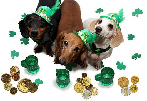 How Your Pet Can Celebrate St. Patrick's Day with You